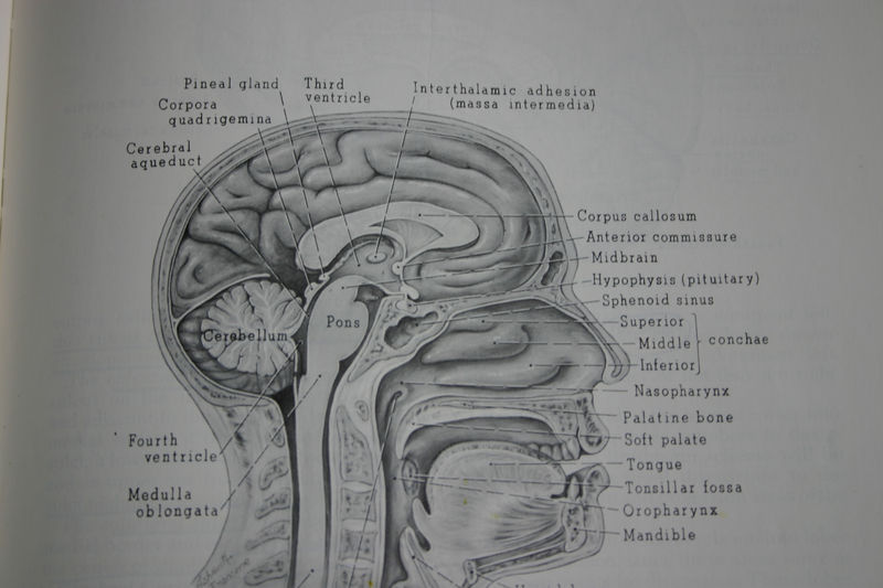 Some hard questions about neurolaw: If you are interested in law and ...